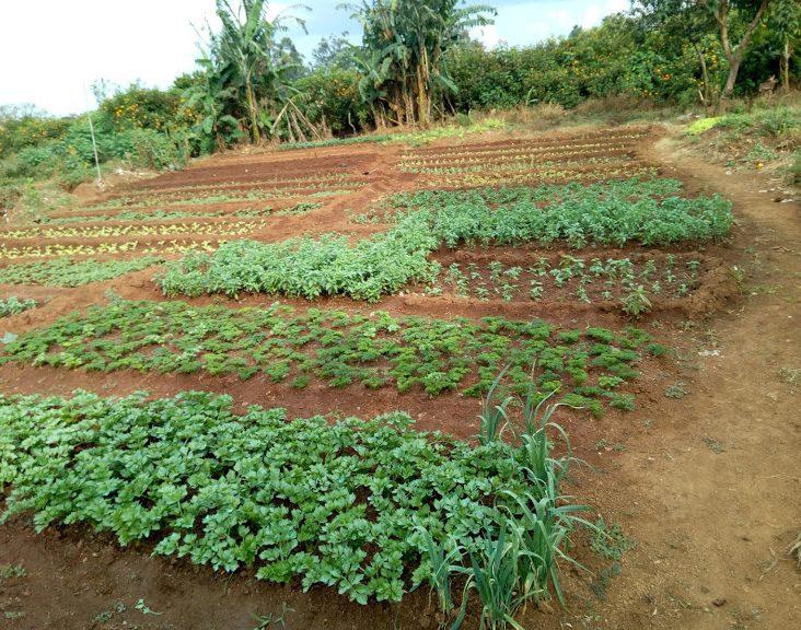 Green Seasoning Nursery